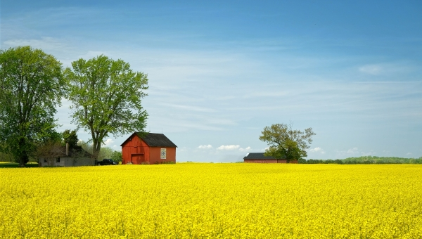 Lessons Learned From Canola