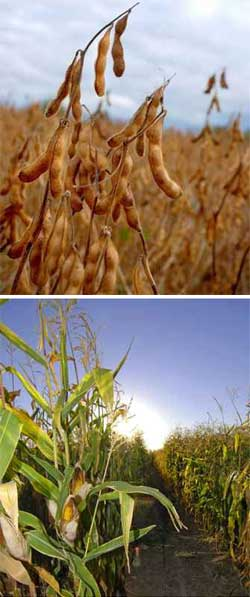 soybean-corn crop rotation